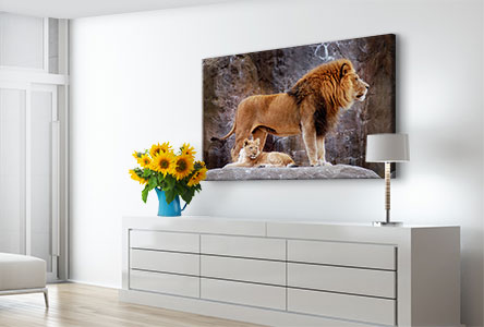 canvas photo lion
