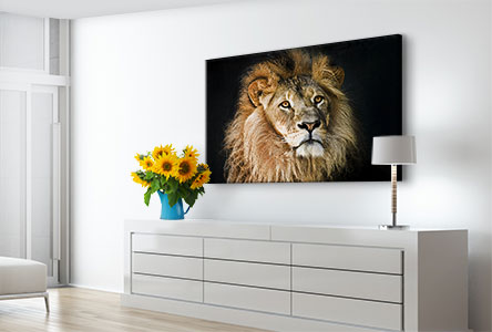 living space example lion on acrylic print